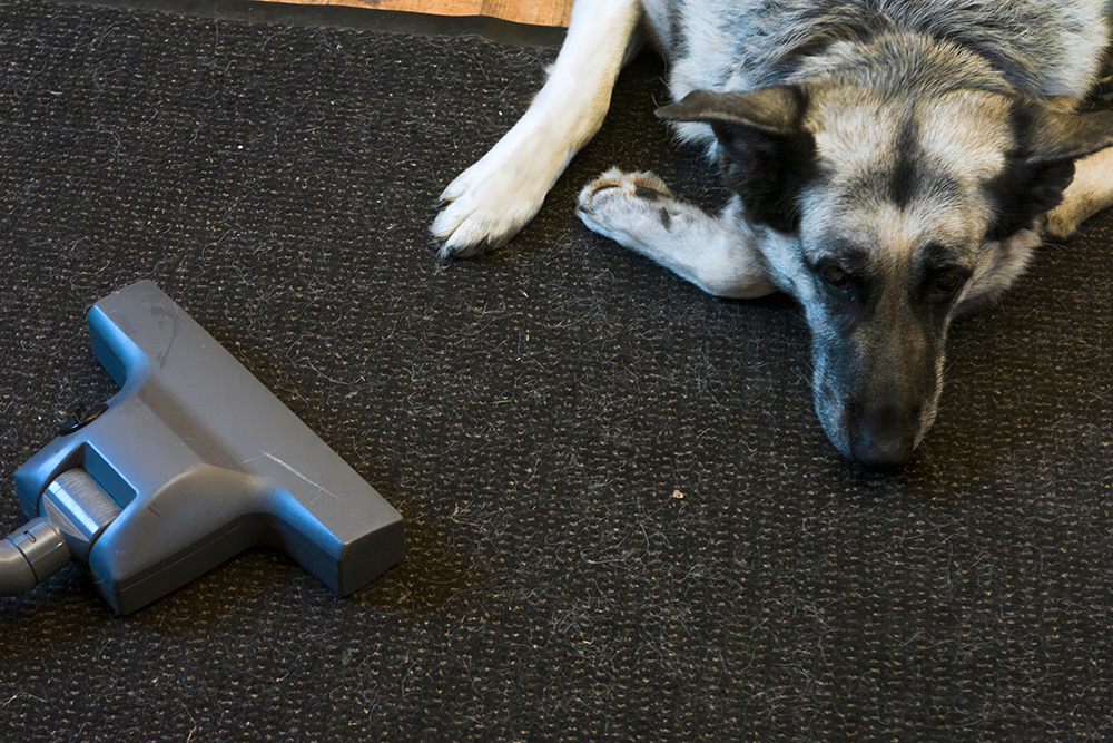 7 Best Carpet Cleaners for Pets